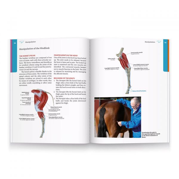 Biomechanics - The handbook for rehabilitation of horses 3
